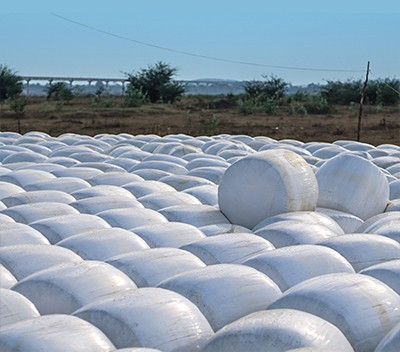 Production of Silage - Cornext